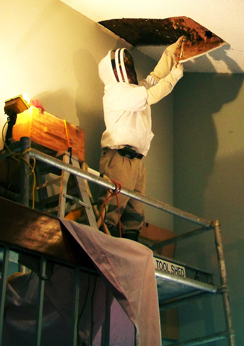 Bee Man getting the honey bee hive out of our house.