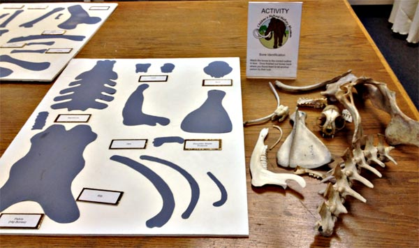 Match bones to labels game for kids.
