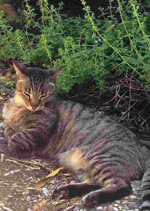 Sleepy Cat enjoys napping near herbs.